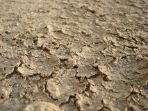 Dry Mud Royalty Free Stock Photo