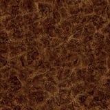 Dry mud Stock Image