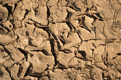 Dry mud or cracked earth Royalty Free Stock Photos