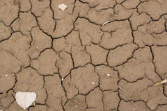 Dry mud Stock Photography
