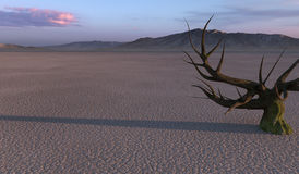 Dry mud desert Royalty Free Stock Image