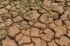 Dry mud. And dry grass Stock Photography