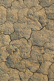 Dry mud texture Royalty Free Stock Photo