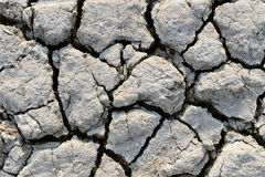 Dry mud texture Royalty Free Stock Image