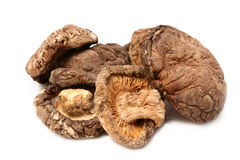 Dry mushroom Stock Images