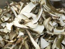 Dry mushroom boletus edulis Stock Images