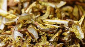 dry mushroom boletus edulis Royalty Free Stock Images