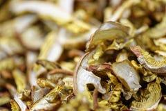 Dry mushroom boletus edulis Stock Photography