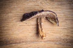 Dry mushroom boletus on wooden table. Stock Photography