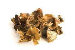 Dry mushrooms Royalty Free Stock Photography
