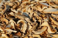 Dry mushrooms background Royalty Free Stock Photo