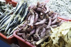 Dry Neritic Squid Stock Photo