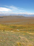 Dry New Zealand landscape Stock Images