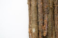 Dry oak bark on a white background. Quercus cortex. Quercus robur.  stock image