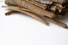 Dry oak bark on a white background. Quercus cortex. Quercus robur.  Royalty Free Stock Photos