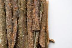 Dry oak bark on a white background. Quercus cortex. Quercus robur.  Stock Image