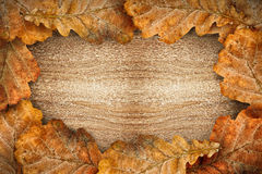Dry oak leaves as frame Royalty Free Stock Photo