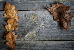Dry oak leaves on grey boards Stock Photo