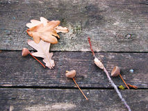 Dry oak leaves. On an old boards in the autumn royalty free stock photo
