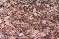 Dry old leaves on the floor stock photography