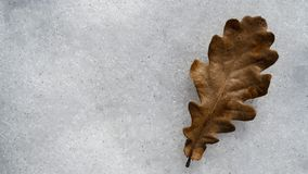 Dry oak leaf in the snow royalty free stock images