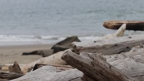 Pale drift wood on a stormy beach. Dry old pale drift wood on a stormy beach stock video footage