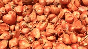 Dry onion stock footage