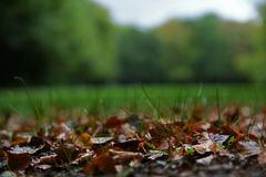Dry orange brown leaves and grass royalty free stock image