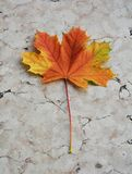 Dry yellow colorful leaf on marble, natural background, garden beauty Stock Images