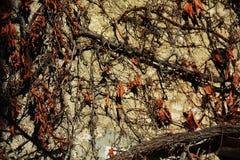 Dry orange leaves on wall, background, vintage image Stock Images
