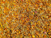 Dry orange and red leaves has fall on floor cause high temperatu. Re in summer Royalty Free Stock Photos