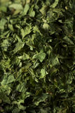 Dry Organic Green Parsley Flakes Stock Image