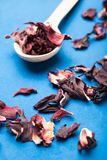 Dry organic hibiscus on a blue background, vertical.  royalty free stock photos