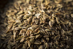 Dry Organic Tarragon Seed Spice Stock Photos
