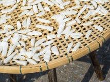 Dry out cortó el coco Foto de archivo libre de regalías