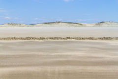 Dry over wet sand  and dunes in Cassino beach Stock Image