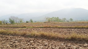 Dryland rice farming and beautiful view Royalty Free Stock Image