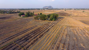 Dry paddy fields. A dry paddy fields during El Nino season in Southeast Asia royalty free stock images