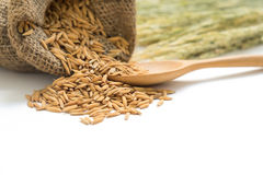 dry paddy rice grain in a sack with wooden spoon Royalty Free Stock Photography