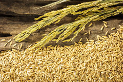 Dry paddy and spike on grunge wooden . Royalty Free Stock Image