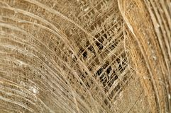 Dry Palm Leaf background Royalty Free Stock Images