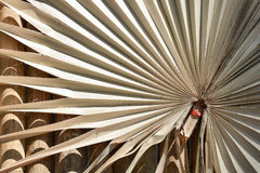 Dry palm leaf pattern Royalty Free Stock Image
