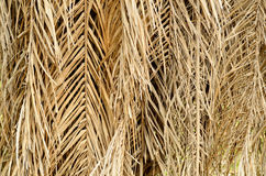 Dry palm leaves Royalty Free Stock Image