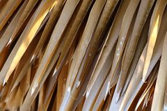 Dry palm leaves background. Detail of dry palm leaves background Stock Photography