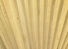 Dry palm leaves texture Royalty Free Stock Image