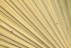 Dry palm leaves texture Stock Image