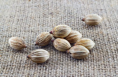 Dry palm seeds on the sack background Stock Photography