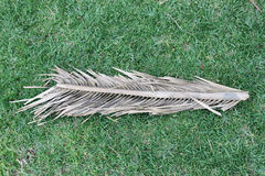 Dry palm tree leaf on green grass. View from above Royalty Free Stock Image