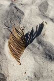 Dry palm tree leaf with sand texture. In the morning Stock Image