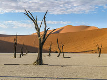 Dry pan, Namibia. A 600 year old dead Acacia trees stand in the middle of the dry pan at Sossusvlei Namibia Royalty Free Stock Photography